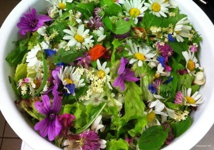 Mauve sylvestre en salade