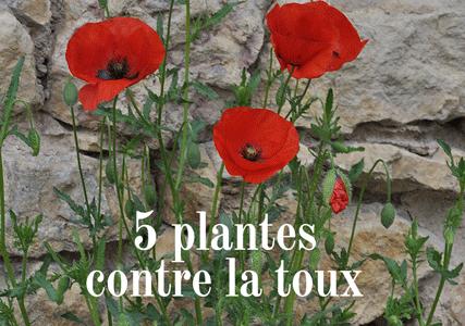 5 plantes pour lutter contre la toux
