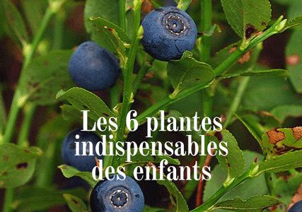 Les 6 plantes indispensables pour les enfants
