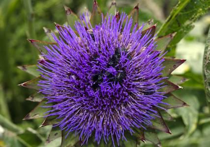 Détox d'automne : 5 plantes pour vous accompagner