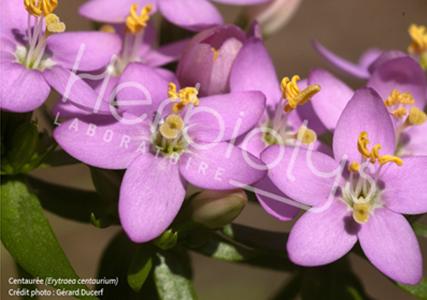 Les élixirs floraux : à l'écoute de nos émotions