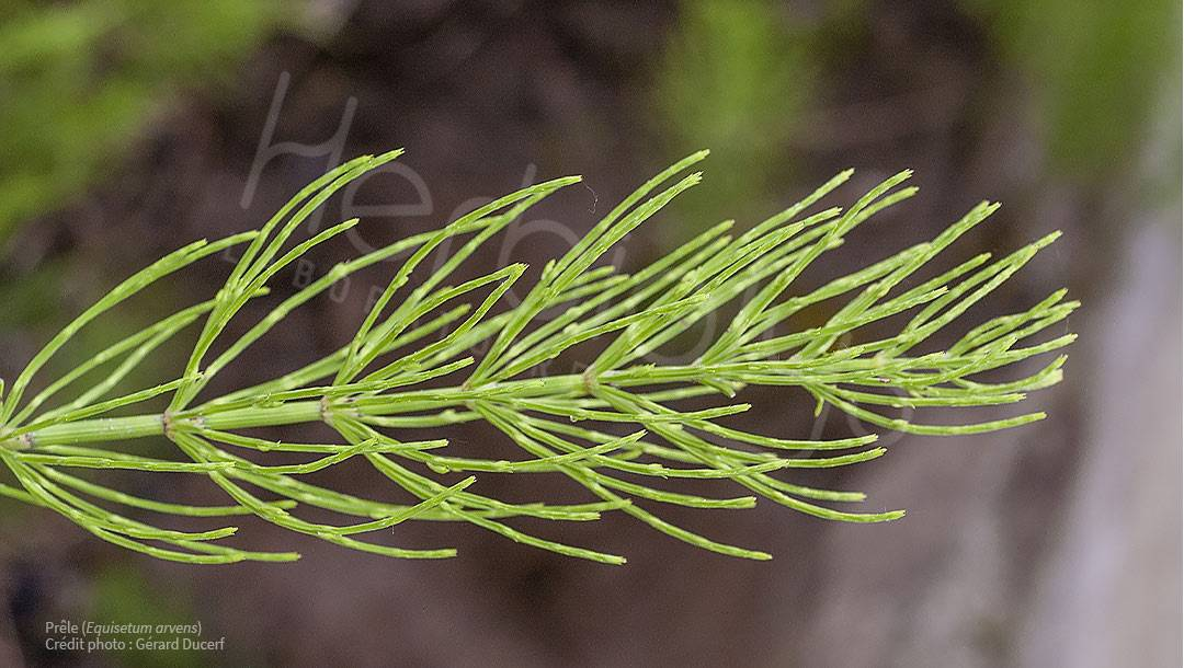 Les 6 plantes pour soulager vos articulations
